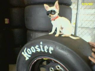 Teacup Chihuahua on Hoosier Tire