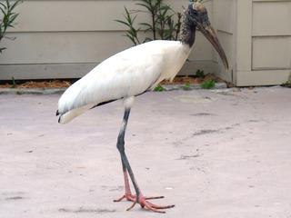 Weird Bird 1