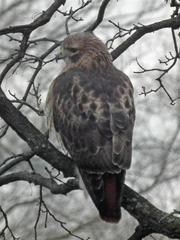 Hawk Dscf9472 Large