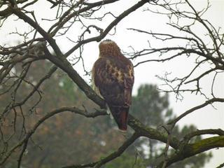 Hawk Dscf9447 Large