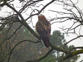 Hawk Dscf9448 Large