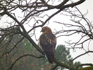 Hawk Dscf9449 Large
