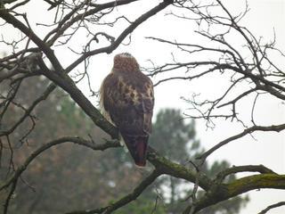 Hawk Dscf9451 Large