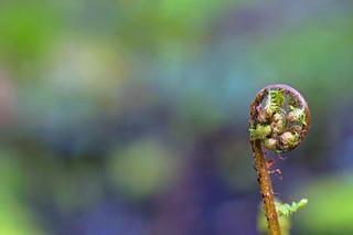 Vattengräs2 Redigerad 1