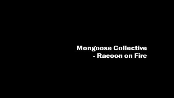 Racoon on Fire - Mongoose Collective
