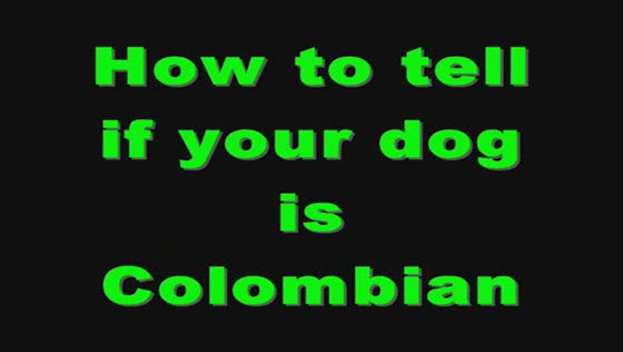 Your Dog might be Colombian if :